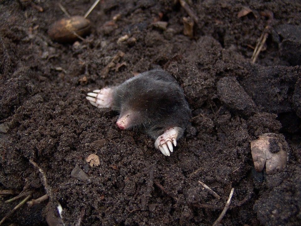 Critters and Concrete: Animal Infestation