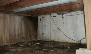 mold and mildew problems in a wet basement