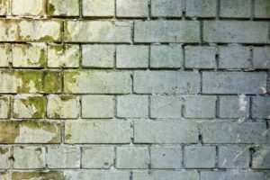 White brick wall with green mold on the left side.