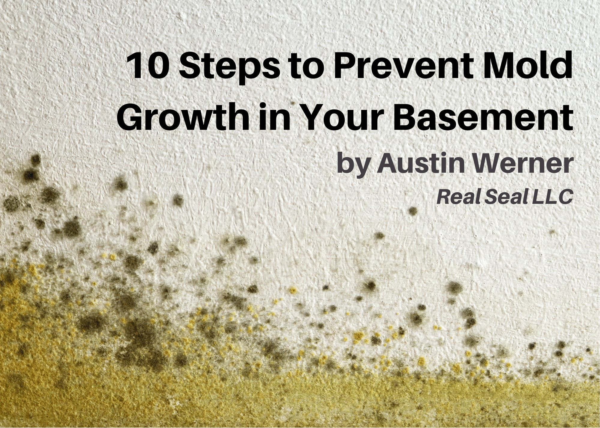 10 Steps to Prevent Mold Growth in Your Basement