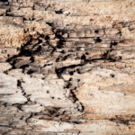 Wood rot can be caused by excessive moisture in your basement