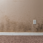 Moldy and musty odors are common basement smells that you may encounter.