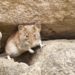 Dead rodents are a distinctive and nasty basement smell.
