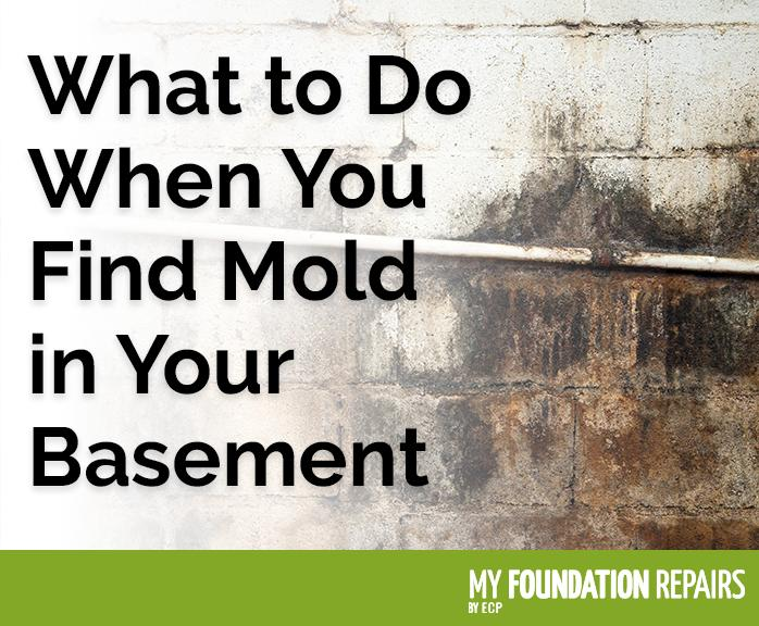 What To Do When You Find Mold in Your Basement